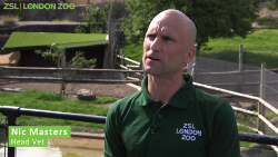 ZSL Nic Green Name_250.png