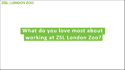 ZSL white question card outlined_250.png