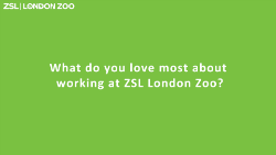 zsl green question card_250.png (1)