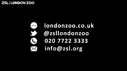 ZSL END white on black_250.png (1)