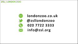 ZSL END Green icons outlined1_250.png (1)